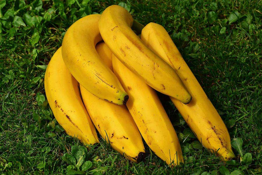 Ripe bananas over the ground